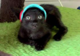 O gatinho foi adotado por Cátia Sousa
