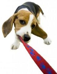 cachorro_desobediente
